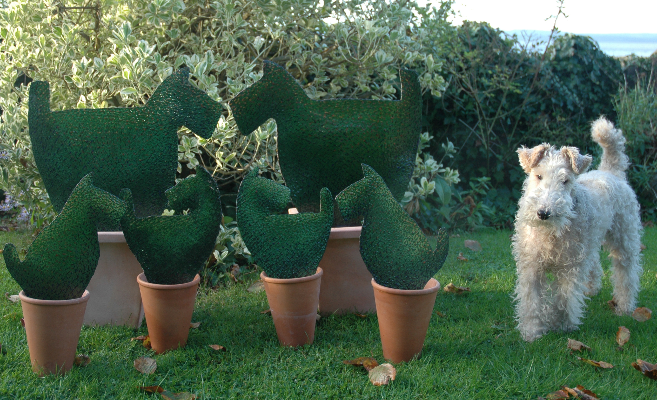 topiary dogs and Daisy