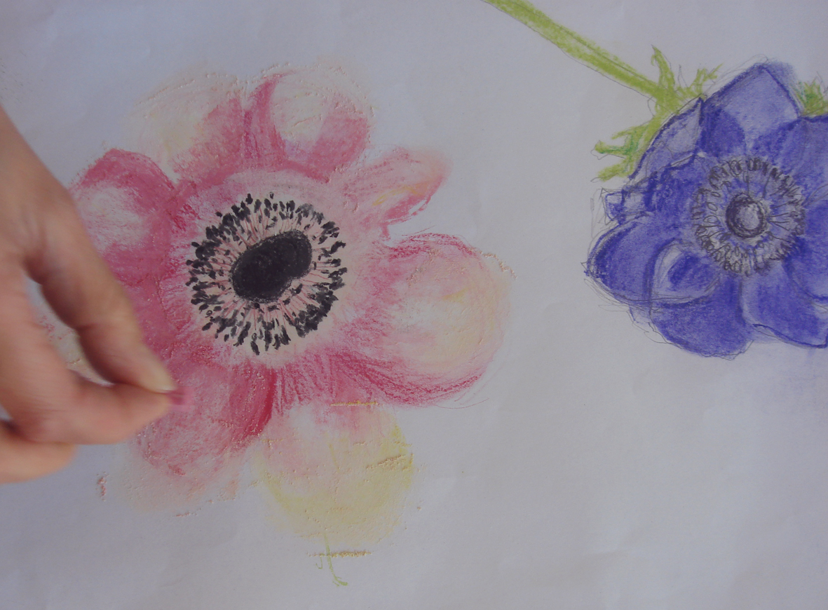 Anemone Flower Line Drawing : Heart space and flower drawing janet haigh her work