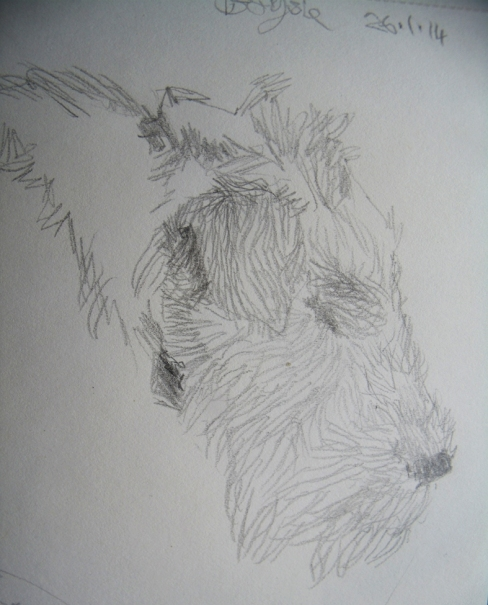 head of sleeping terrier