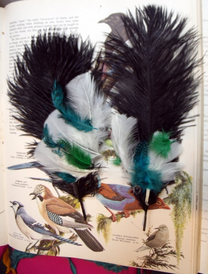illustrated birds with feathers