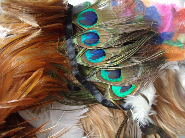 feathers peacock and pheasant